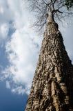 Большое дерево в крупном плане леса стоковое изображение rf