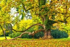 Большое дерево в парке замка Стоковая Фотография RF