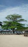 Большое дерево в пляже Таиланда Стоковые Фотографии RF