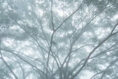 Большое дерево в утре с густым туманом Стоковая Фотография