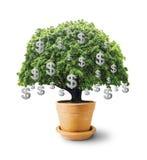 Большое дерево в цветочном горшке с знаком доллара на белой предпосылке Стоковое Изображение