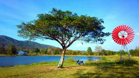 Большое дерево в chiangmai Стоковая Фотография RF
