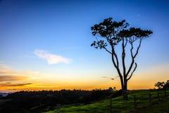 Большое дерево на заходе солнца, Квинсленд Eucalypt, Австралия Стоковое Изображение RF