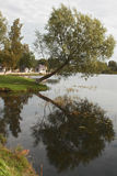Большое дерево на озере Стоковые Фотографии RF