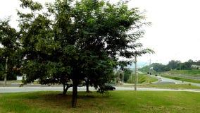 Большое дерево около дороги Стоковые Изображения RF