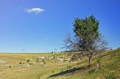 Большое дерево с тенью Стоковые Изображения