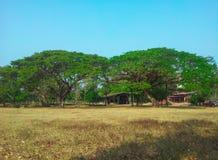 Большое дерево (дуо) Стоковое фото RF