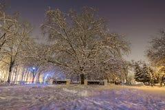Большое дерево Стоковая Фотография RF