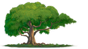Большое дерево иллюстрация штока