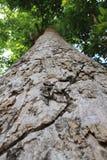 Большое дерево стоковое фото