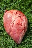 Большое животное сердца Стоковые Изображения RF