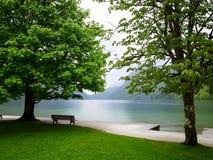 Большое зеленое дерево озером Стоковая Фотография