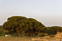 2 большое и старые деревья Стоковое Изображение RF