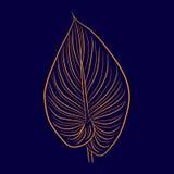 Большое комнатное растение лист Стоковое Изображение