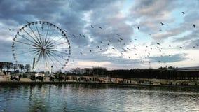 большое колесо paris Стоковая Фотография