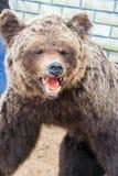 Большое объемное изображение бурого медведя исполненного от кожи медведя Стоковые Фото