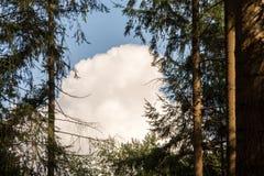 Большое облако через деревья Стоковое Фото