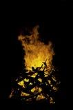 Большое оранжевое пламя Стоковые Изображения RF