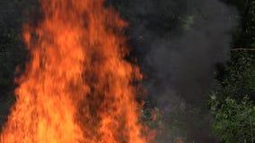 Большое пламя огня делает повреждение к фауне и флоре леса после засухи 4K сток-видео