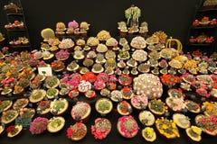Большое разнообразие зацветая кактусов стоковая фотография rf