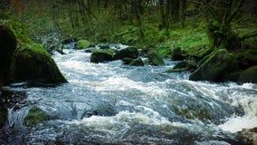 Большое река в старом лесе видеоматериал