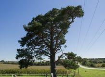 Большое старое дерево в пионерском кладбище Стоковое Фото