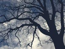Большое страшное дерево Стоковая Фотография