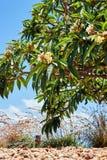 Большое тропическое дерево с цветками на ем, близкое поднимающем вверх стоковые изображения