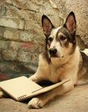 Большое чтение собаки Стоковые Изображения RF