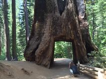 Большое rewood Стоковые Изображения