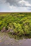 Большой ландшафт на национальном парке болотистых низменностей Стоковая Фотография