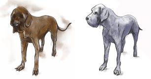 Большой датчанин (немецкий Mastiff) - нарисованная рукой иллюстрация вектора Стоковое Изображение RF