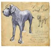 Большой датчанин (немецкий Mastiff) - нарисованная рукой иллюстрация вектора Стоковые Фотографии RF