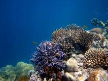 Большой барьерный риф Австралия. Стоковые Изображения RF