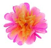 Большой бумажный цветок пиона Стоковые Фото