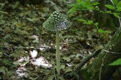 Большой гриб растя в лесе Стоковые Изображения