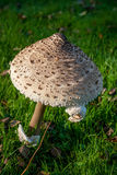 большой гриб Стоковые Изображения RF