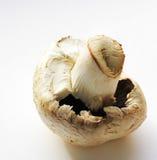 большой гриб Стоковые Фотографии RF