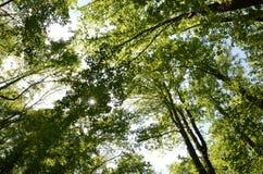 Большой лес и небо закоптелых гор Стоковая Фотография