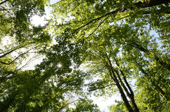 Большой лес и небо закоптелых гор Стоковое фото RF