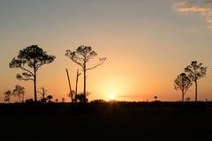 Большой заповедник Cypress - Флорида Стоковая Фотография RF