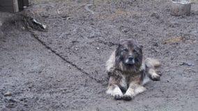 Большой злий сторожевой пес на цепи вокруг будочки и охраняемая территория акции видеоматериалы