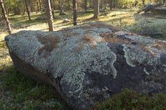 Большой камень в лесе перерастанном с лишайником Стоковая Фотография
