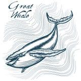 большой кит бесплатная иллюстрация