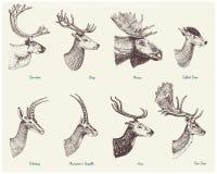 Большой комплект рожка, животных лосей antlers или лося с импалой, газелем и большими kudu, северным оленем ланей и рогачом, лань иллюстрация вектора