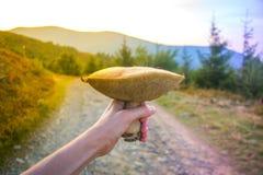 Большой коричневый свежий съестной гриб в человеческой руке на предпосылке дороги горы Стоковые Изображения RF