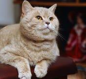 большой кот Стоковое Изображение
