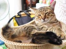 большой кот Стоковое Фото