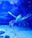 Большой краб в аквариуме Стоковые Фото