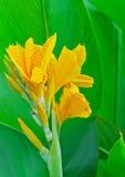 Большой красивый желтый цветок Стоковые Изображения